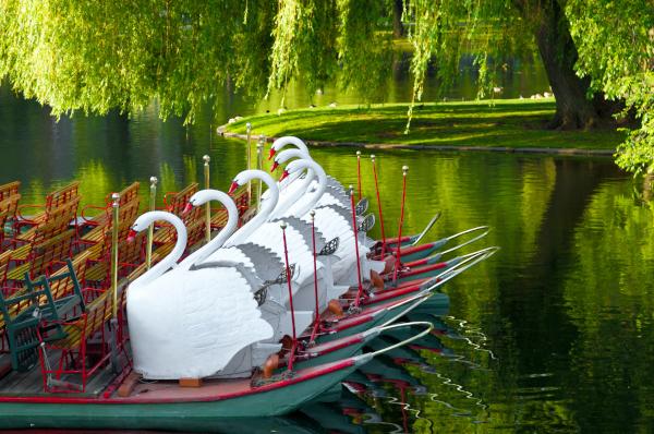 Julia-Pagets-Business-Swan-Boats-in-Boston-WWP